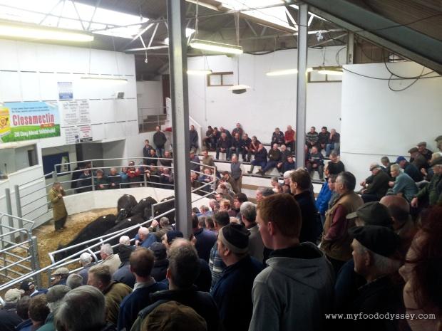 Bandon Cattle Mart, Ireland | www.myfoododyssey.com