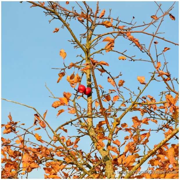 Autumn Apples | www.myfoododyssey.com