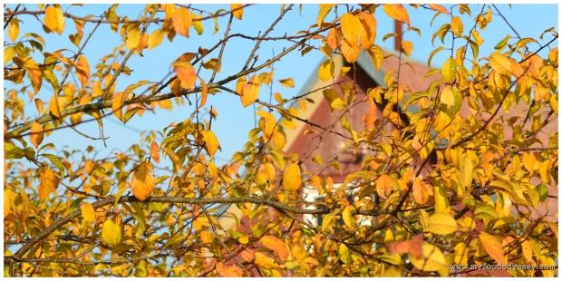 Autumn House | www.myfoododyssey.com