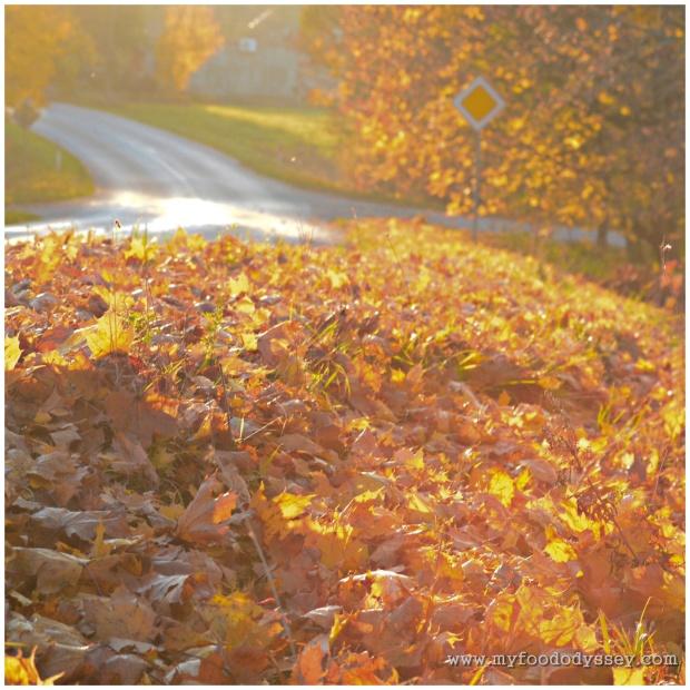Autumn Road | www.myfoododyssey.com