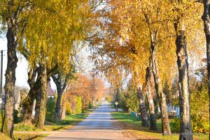 Autumn in Lithuania | www.myfoododyssey.com
