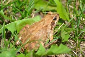 Frog | www.myfoododyssey.com