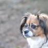 Dog reflecting   www.myfoododyssey.com