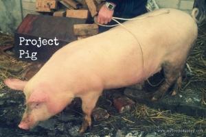 Pig Butchery | www.myfoododyssey.com