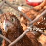 Curious Chicken | www.myfoododyssey.com