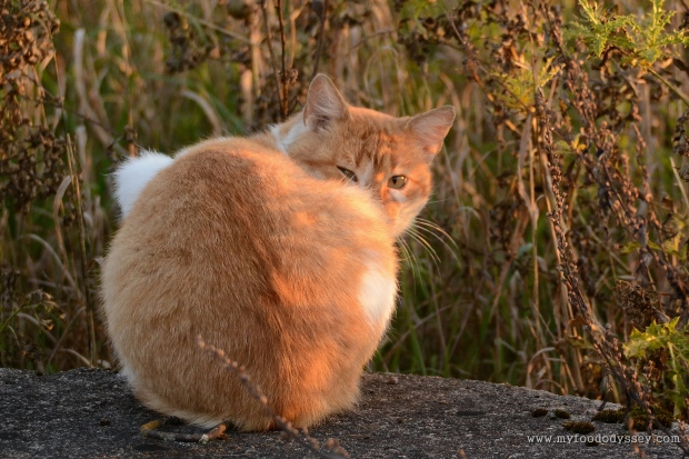 Angry Cat | www.myfoododyssey.com