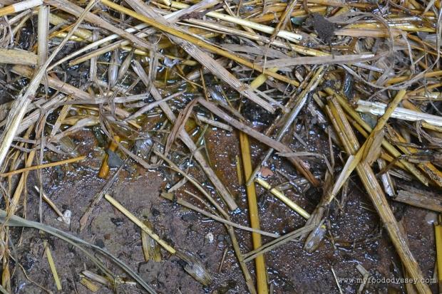 Egg Thief Evidence? | www.myfoododyssey.com