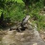 Lizard, Sydney Harbour National Park | www.myfoododyssey.com