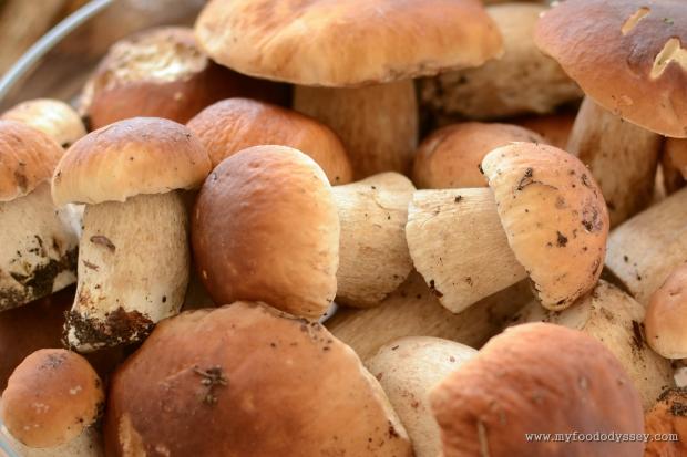 Mushroom Picking, Lithuania | www.myfoododyssey.com