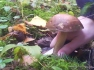 Mushrooms_1_2
