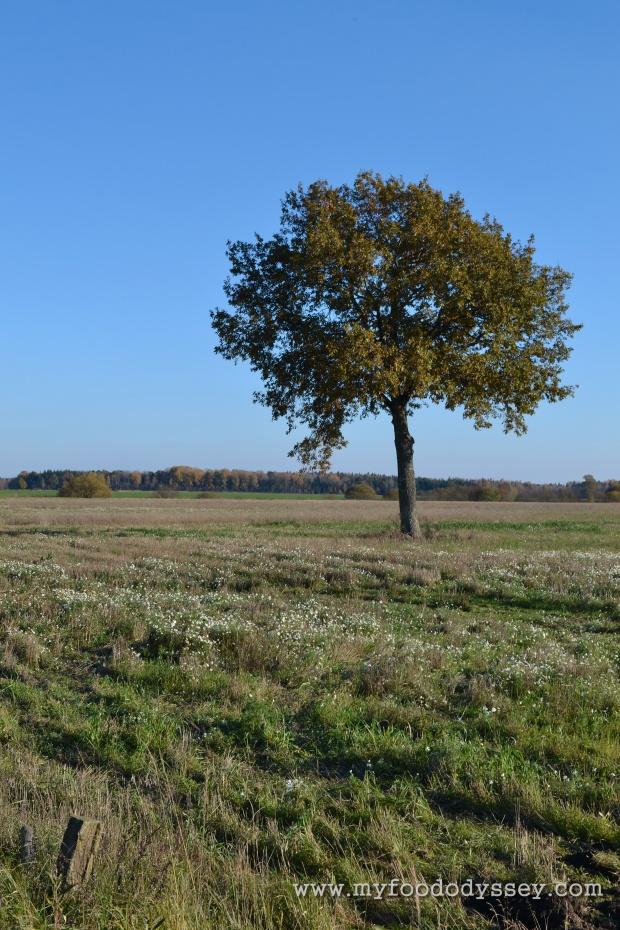 Lone Tree, Adakavas | www.myfoododyssey.com