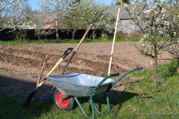 Planting Vegetables | www.myfoododyssey.com