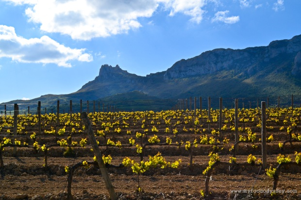 Vines in Rioja, Spain | www.myfoododyssey.com