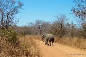 Baby Elephant | www.myfoododyssey.com