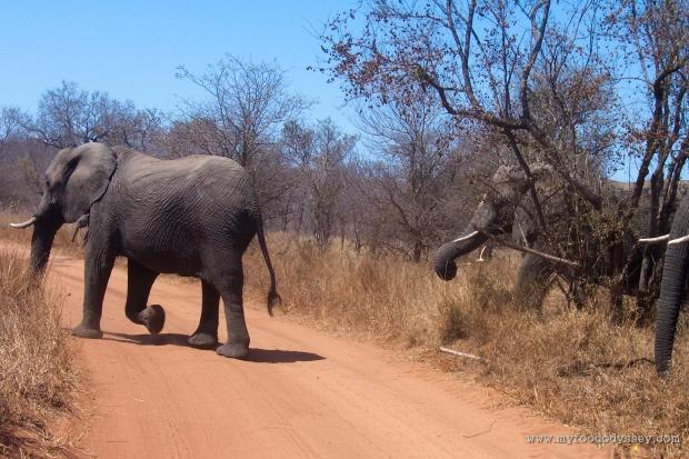 Elephants | www.myfoododyssey.com