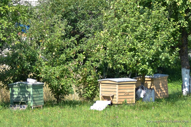 Bee Hives | www.myfoododyssey.com