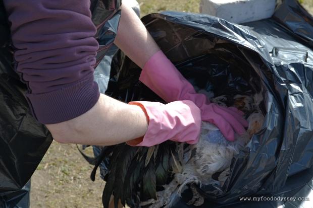 Chicken Processing | www.myfoododyssey.com