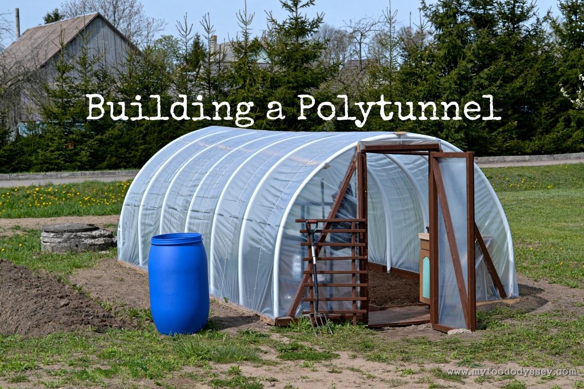 Building A Polytunnel My Food Odyssey