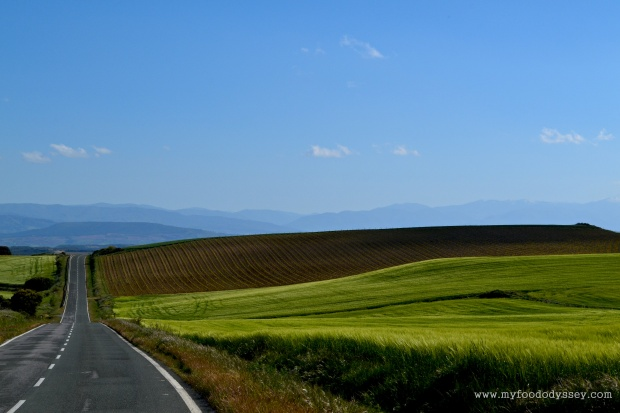 Rioja, Spain | www.myfoododyssey.com