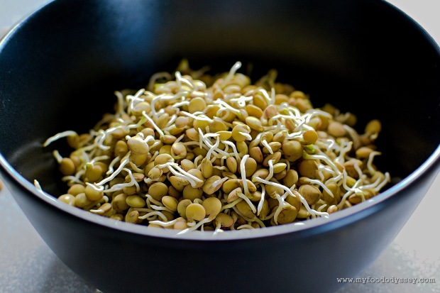How to Sprout Lentils | www.myfoododyssey.com