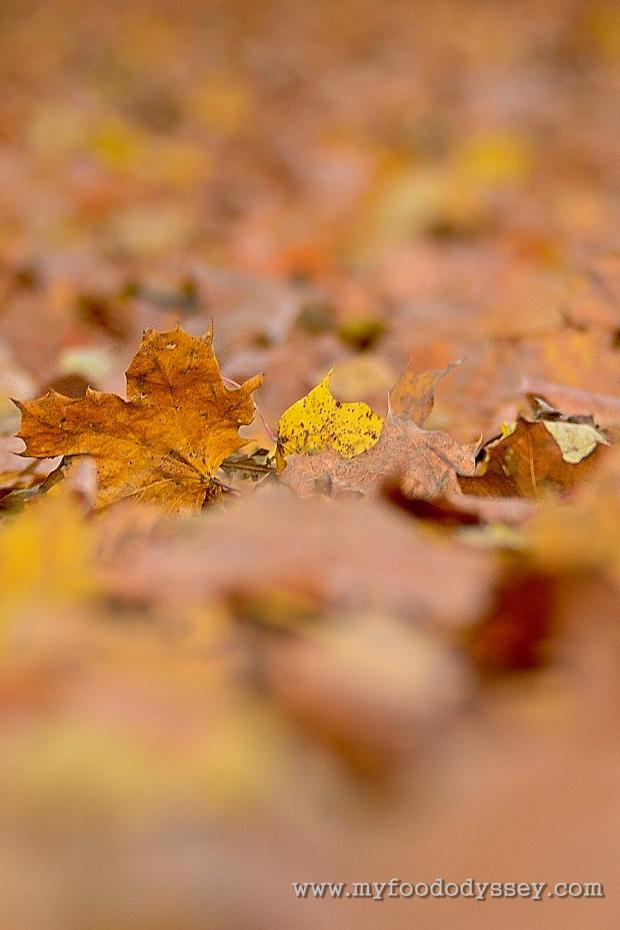 Autumn Leaf | www.myfoododyssey.com