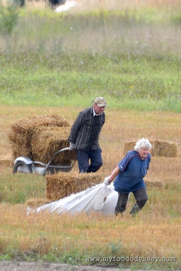 Gathering Hay Bales | www.myfoododyssey.com