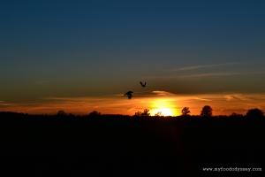 Halloween / Autumn Sunset   www.myfoododyssey.com