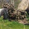 Trio of Gorillas | www.myfoododyssey.com
