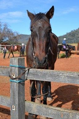 Chesleigh Homestead in Sofala, Australia | www.myfoododyssey.com