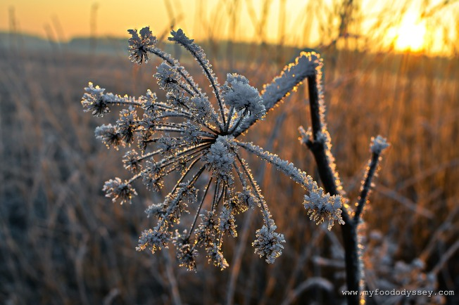 Frost in the countryside, Lithuania | www.myfoododyssey.com
