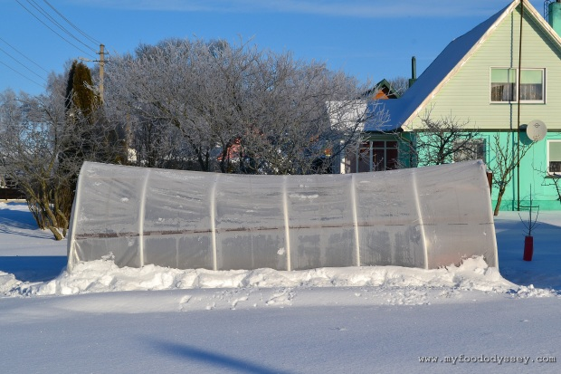 Polytunnel Bend under weight of Snow | www.myfoododyssey.com