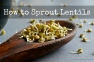 How to Sprout Lentils | www.myfoododyssey,com