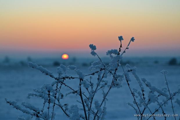Winter Sunset, Lithuania | www.myfoododyssey.com