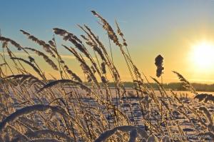 Winter Sunset Lithuania DSC_0022
