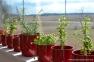 Rosemary, Mint & Coriander (Cilantro) | www.myfoododyssey,com