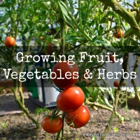 Growing Vegetables | www.myfoododyssey.com