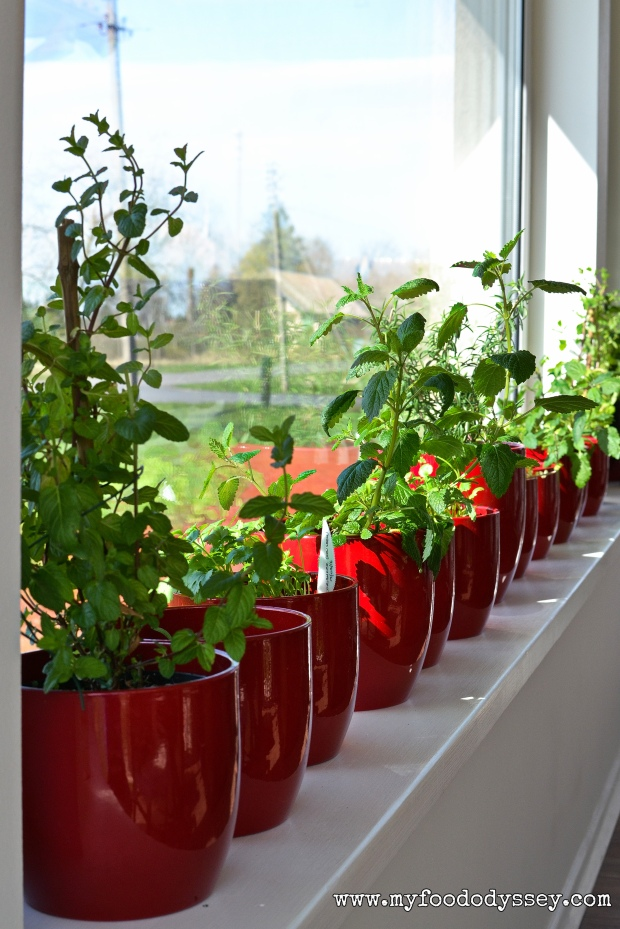 Windowsill Herbs | www.myfoododyssey.com