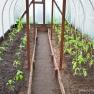 Planting Greenhouse | www.myfoododyssey.com