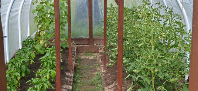 Greenhouse Plants | www.myfoododyssey.com