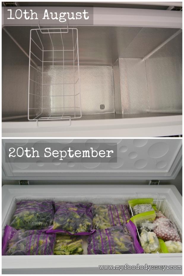 Full Freezer | www.myfoododyssey.com