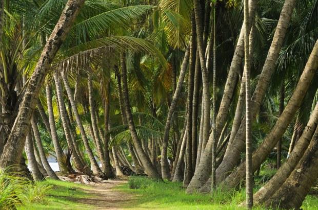 Coconut Trees, Kerala (India) | www.myfoododyssey.com via www.keralatourism.org