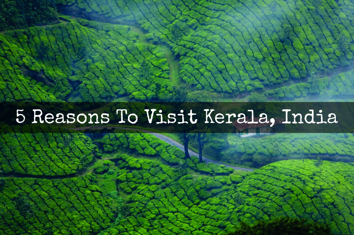 5 Reasons To Visit Kerala India on Me Book