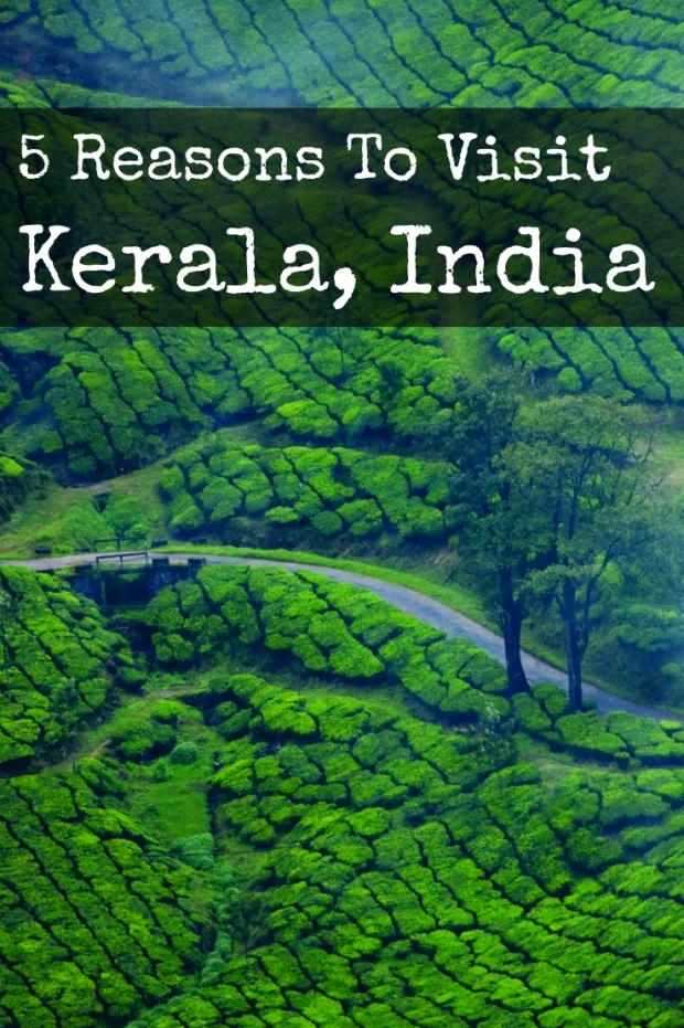 Tea Plantation, Munnar (Kerala, India) | www.myfoododyssey.com via www.keralatourism.org