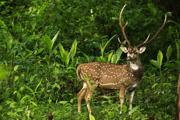 Deer at Siruvani Reservoir, Palakkad | www.myfoododyssey.com via www.keralatourism.org