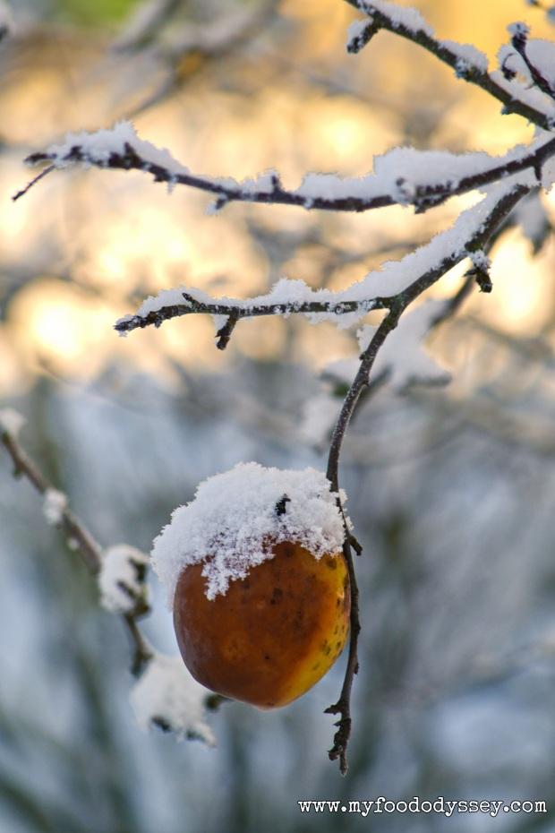 Snowy Apple, Lithuania | www.myfoododyssey.com
