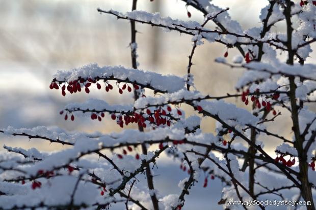 Snowy Berries, Lithuania | www.myfoododyssey.com