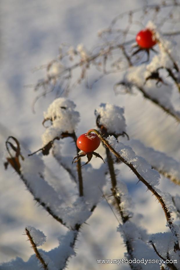 Snowy Rosehip, Lithuania | www.myfoododyssey.com