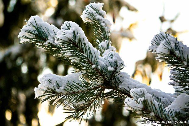 Winter Snow, Lithuania | www.myfoododyssey.com