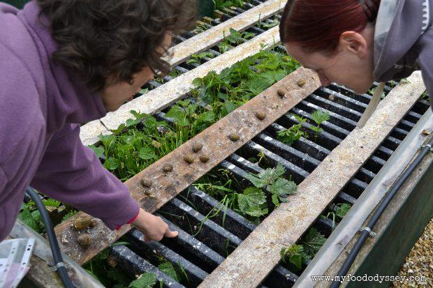 Snail Farm, France | www.myfoododyssey.com