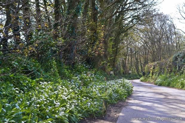 Camel Valley Vineyard, Cornwall | www.myfoododyssey.com